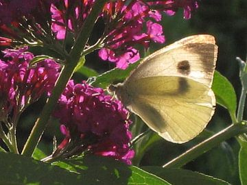 Vlinder von Eugene Klinkenberg