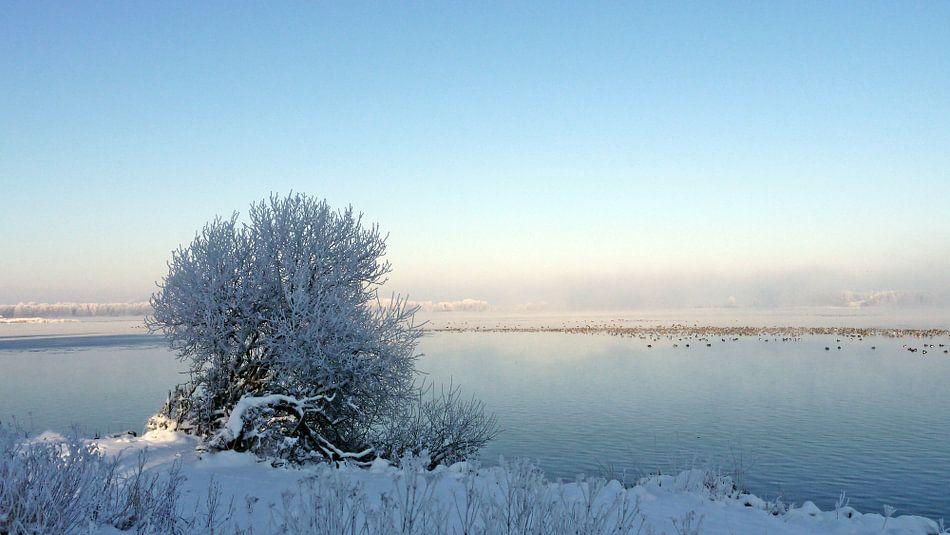 Winter, de kleur van kou ...