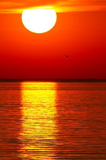Natuur | Zonsondergang aan het IJsselmeer - Oostvaardersplassen van Servan Ott