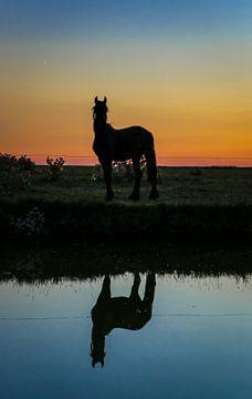 Paard reflectie tijdens zonsondergang sur
