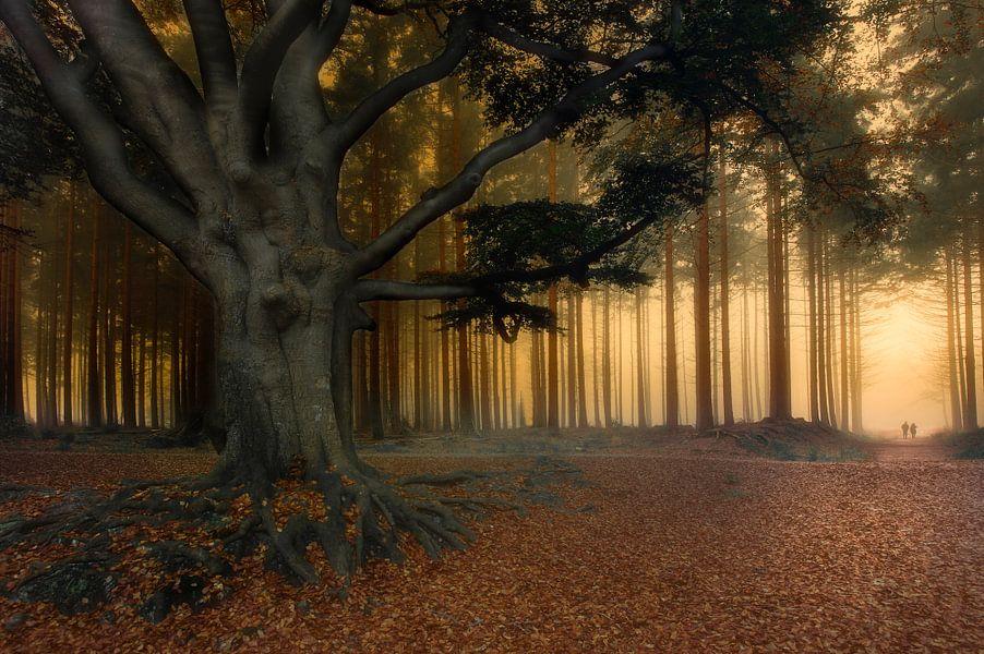 Naar het licht......... van Piet Haaksma