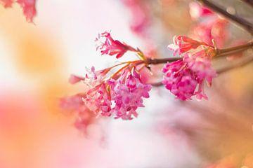 De roze bloem in mijn hart.... van meinFarbentanz