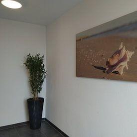 Photo de nos clients: Big shell sur Clazien Boot