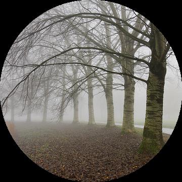 Berken in de mist van Yvonne Smits