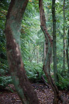 Design by nature (7101) van Tot Kijk fotografie: natuur aan de muur
