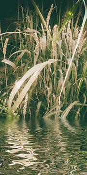 Weizenwasser van Christine Nöhmeier