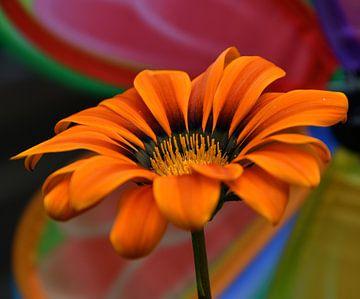 Bunte Blume, bunte Blume, blumenfarbe von J..M de Jong-Jansen