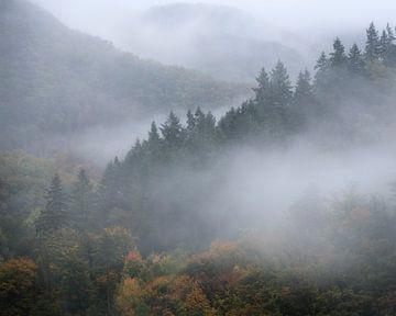 Dennenbomen in de mist rond Burg Eltz op een regenachtige herfstdag in Duitsland. van Jos Pannekoek