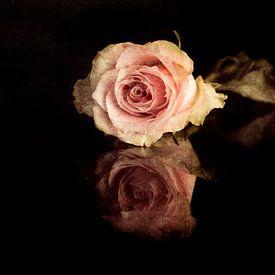 Roos van Elly van Veen