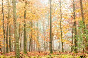 Mistige herfstochtend in een prachtig bos. van Francis Dost