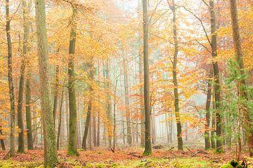 Matin d'automne brumeux dans une belle forêt. sur Francis Dost