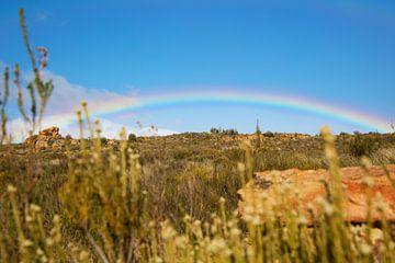 Afrikaanse hele regenboog  van Dexter Reijsmeijer