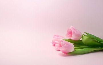 roze tulpen  van Compuinfoto .