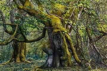 Enttreffen im spanischen Wald von Lars van de Goor