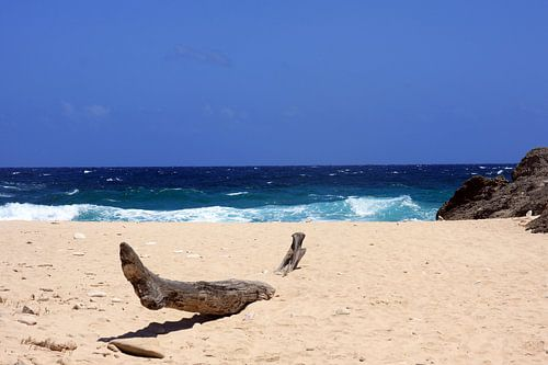 caraibisch strand van gea strucks