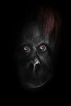 Das flache Gesicht eines Orang-Utans mit klaren orangefarbenen Augen, ein volles Gesicht aus der Dun von Michael Semenov