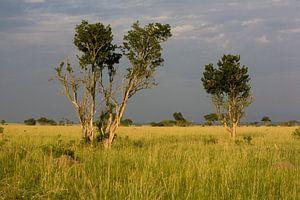 Donkere wolken boven de savanne van