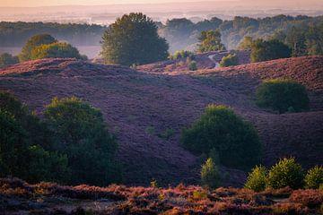 violette Landschaft von Pim Leijen