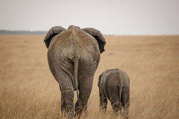 Olifanten in Kenia van Heleen Middel