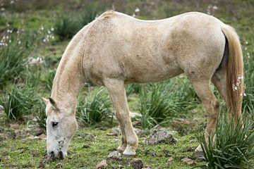 Paard in de wei van videomundum