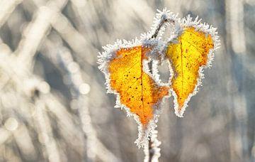 Rijp op bladeren op Texel / Hoarfrost on leaves on Texel van Justin Sinner Pictures ( Fotograaf op Texel)