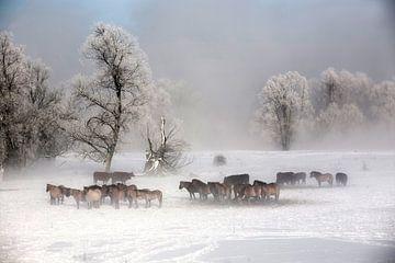 Konikpaarden in winters landschap von Ger Loeffen