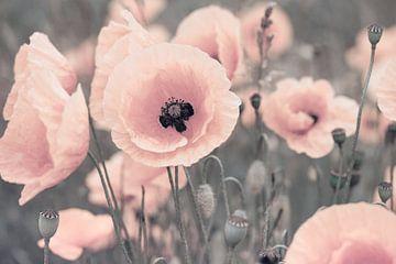 Mohnblumen rosa pastell von Julia Delgado