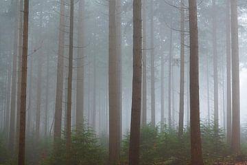 Blick in eine neblige Pinienlandschaft von Sjoerd van der Wal