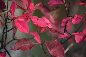 bladeren in de herfst van
