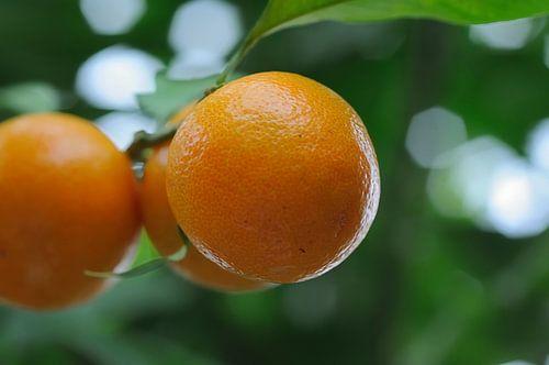 Bokalicious oranges van
