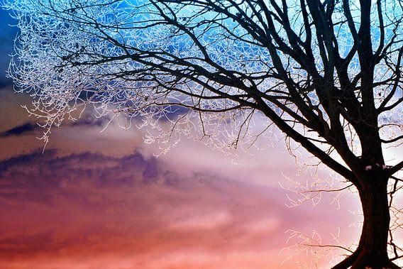 Winterfantasie van Renate Knapp