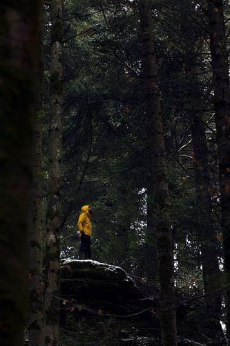 Rots als uitkijktoren in de bossen van de Vogezen van
