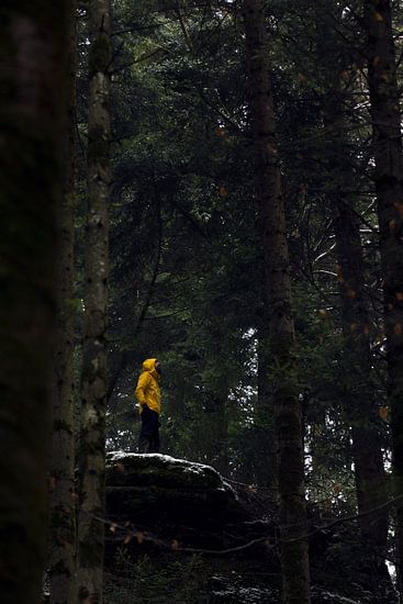 Rots als uitkijktoren in de bossen van de Vogezen