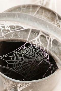 Spinnenweb in gieter met rijp op boerenerf van Sandra Koppenhöfer