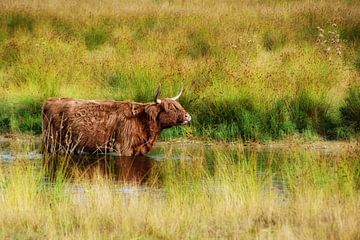 Highlander écossais sur Jessica Berendsen