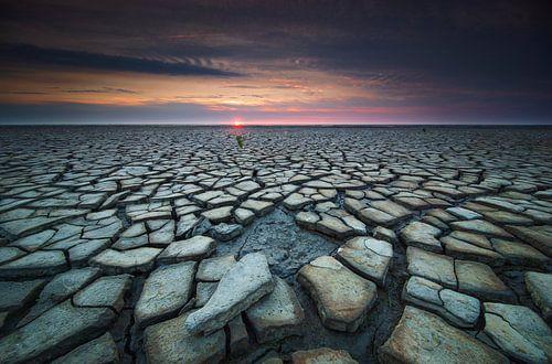 De droogte van