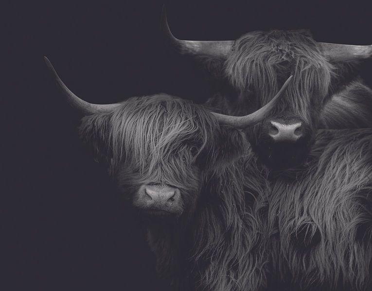 Schotse hooglander schilderij - Schotse hooglander – Stierenkop – Koe – Koeien – Bull – Highlander van Hendrik Jonkman