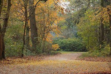 De herfst in het bos von Ronald Smits