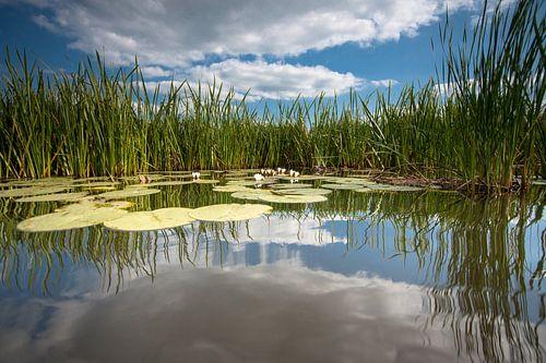Waterlelie op spiegelend wateroppervlak met witte wolken