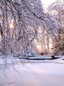 zonnige sneeuw von Marianne Bras