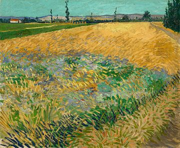 Vincent van Gogh, Korenveld