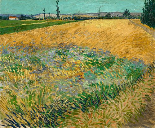 Vincent van Gogh, Korenveld van