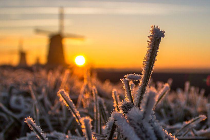 Rijp op de grassprieten in het Nederlandse landschap waar de molens tijdens zonsondergang op de acht van Dennis Dieleman