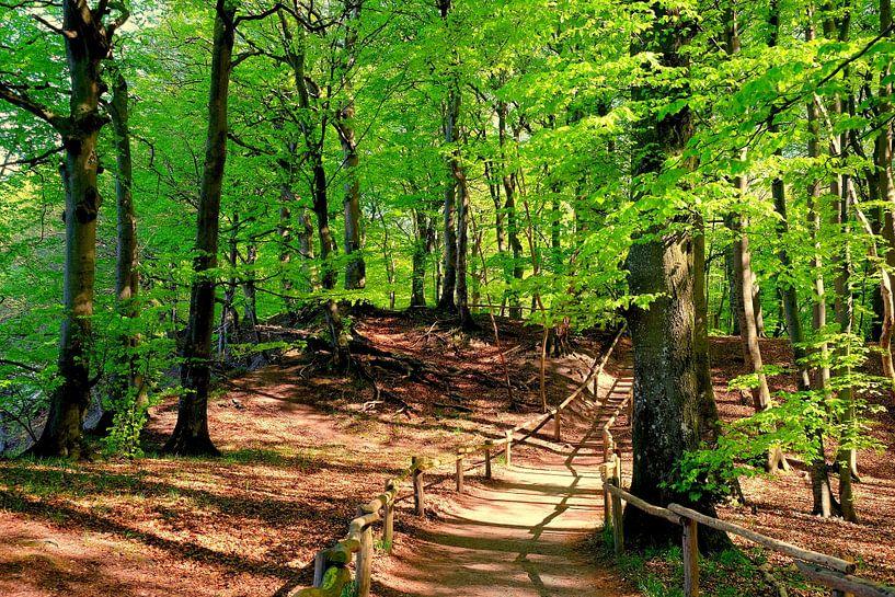 Oktoberwald von Ostsee Bilder