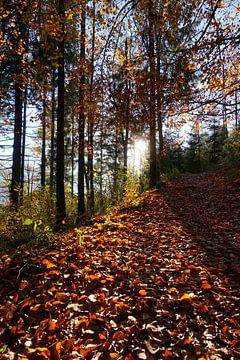 Herfstbladeren en bomen van Kelly Alblas