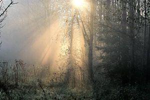 Morning sun  van Marco van de Pol