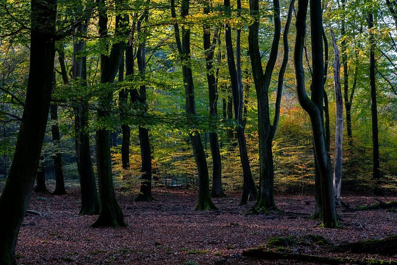 Herfstkleuren van Ingrid Aanen