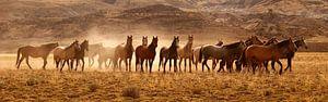 Wild Horses van
