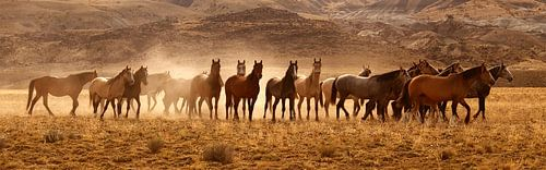 Wild Horses von Gerard Burgstede