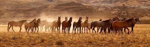 Wild Horses van Gerard Burgstede
